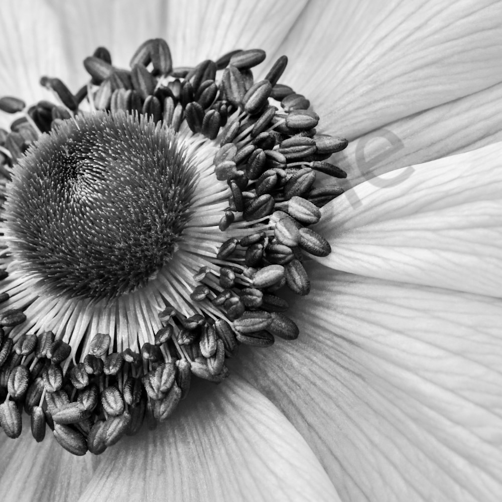 Windflower 24x16 paptvh