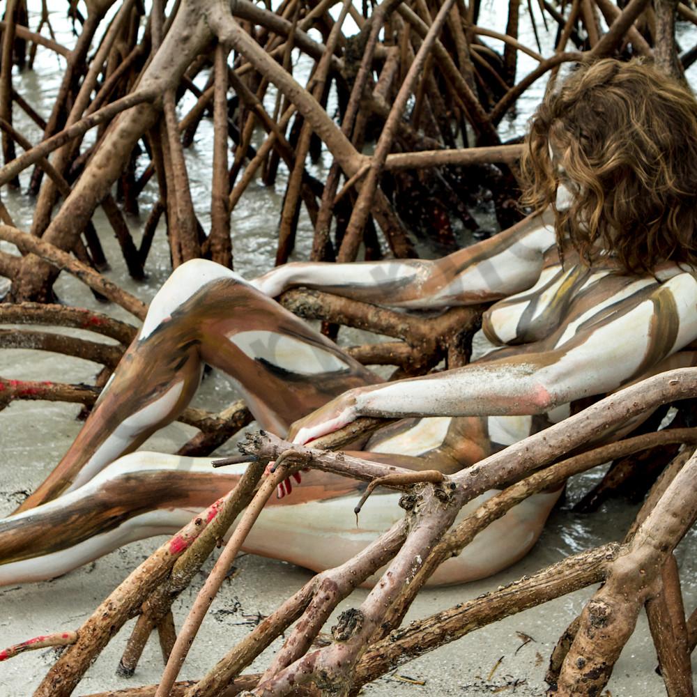 Mangrove.roots.fl jndf4e