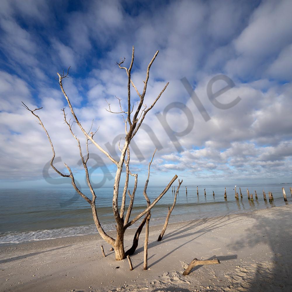 9779 tree posts ft myers bch 6x4 jq2qzq