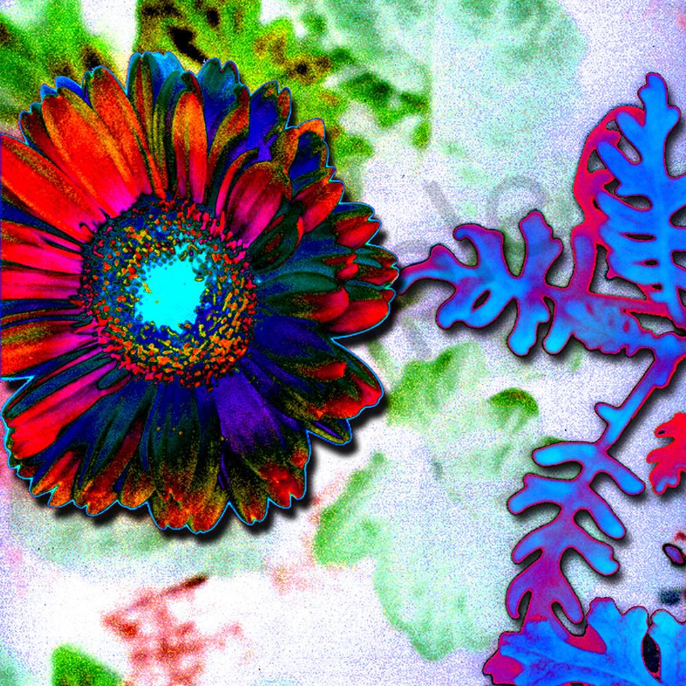 Flower 30 om5bnp