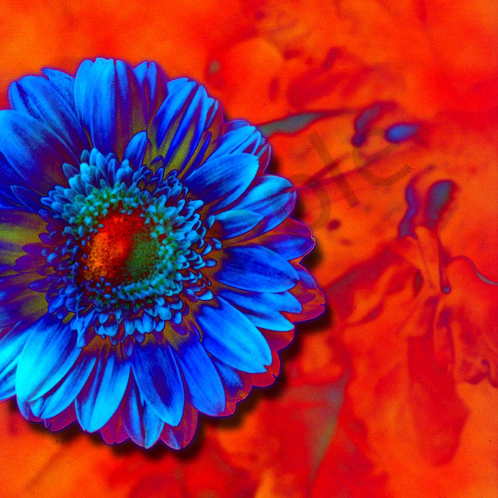 Flower 31 ukndsw