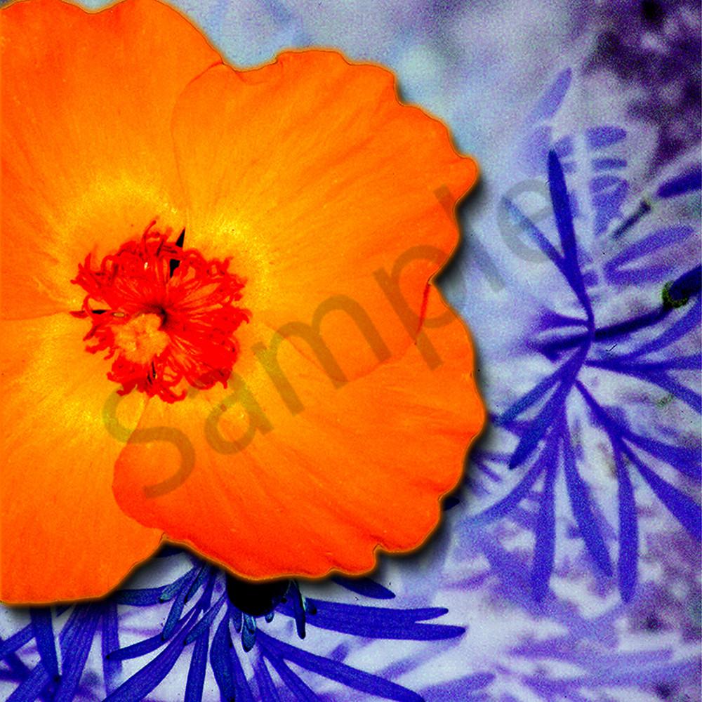 Flower 37 jiefsf