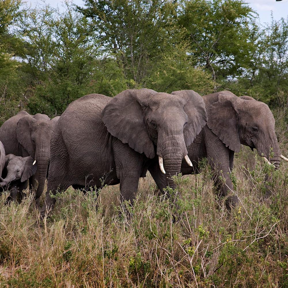 8971 elephant family 6x4 mepdia