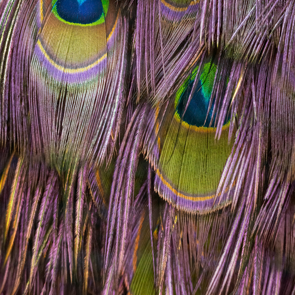 Feather fringe 16x24 lxzme6