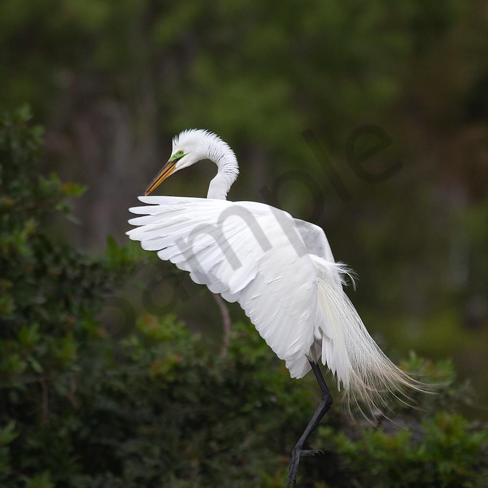 1720 landing egret 2 4x6 bymwgj