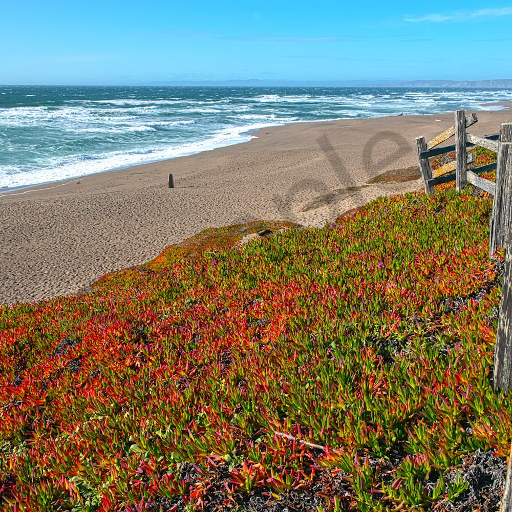 Beach on point reyes near lighthouse california hqhfdi