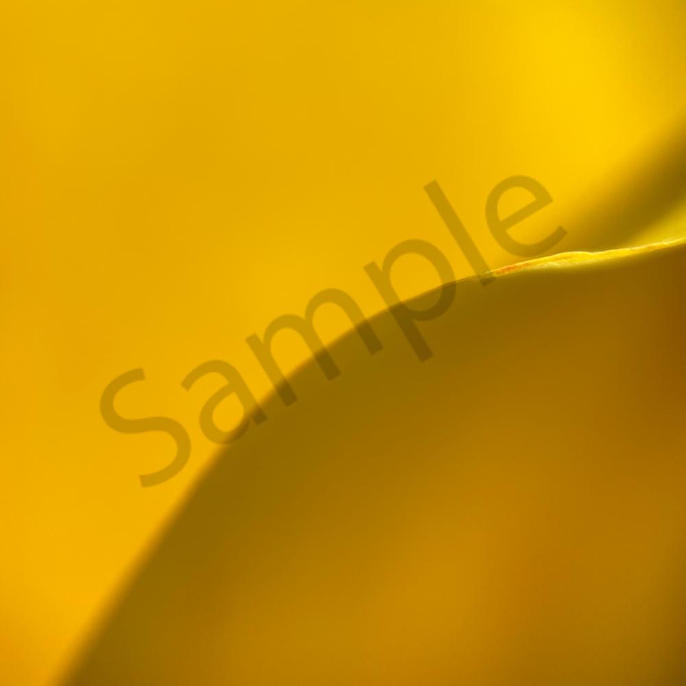 Yellow tulilp petal edge 1363 cegcod