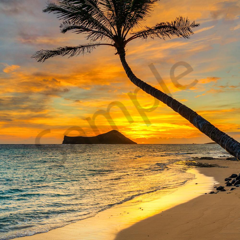 Kaiona palm sunrise pt151 vjk90q