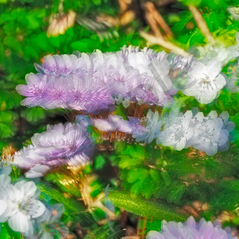 dsc8696 flower stack 2 usm9lu
