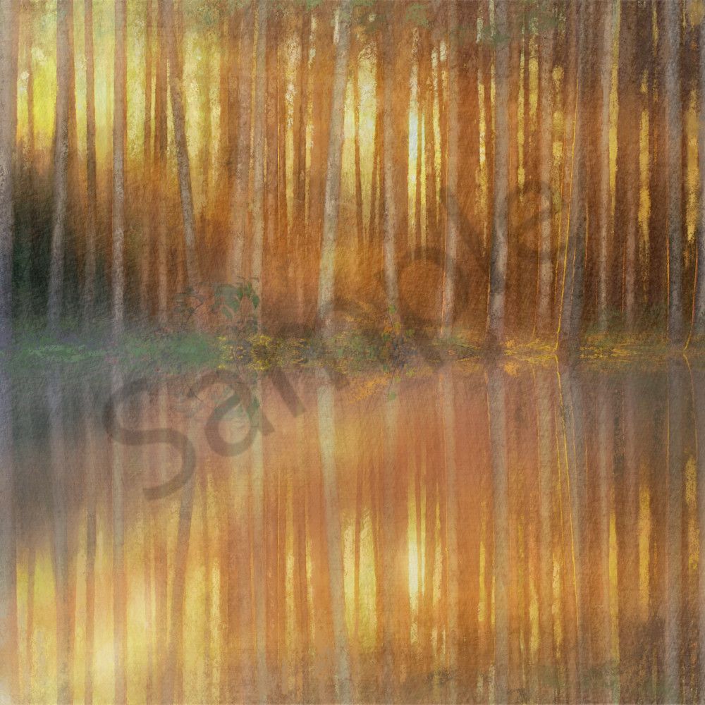 Sunrise through the trees by camille barnes isa9mj