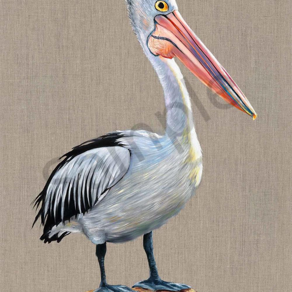 Catherine boreham 012 pelican 2000px bgucd2