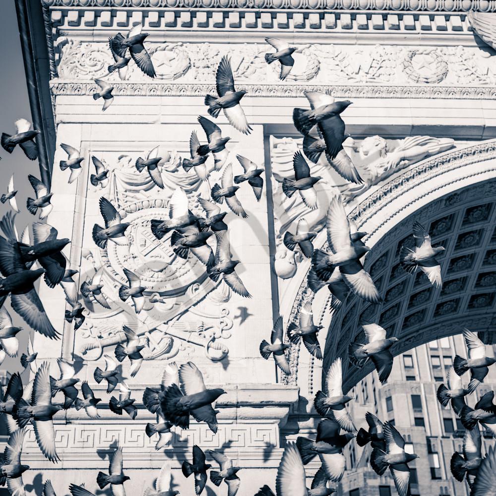 Washington square pigeons tlg5ly