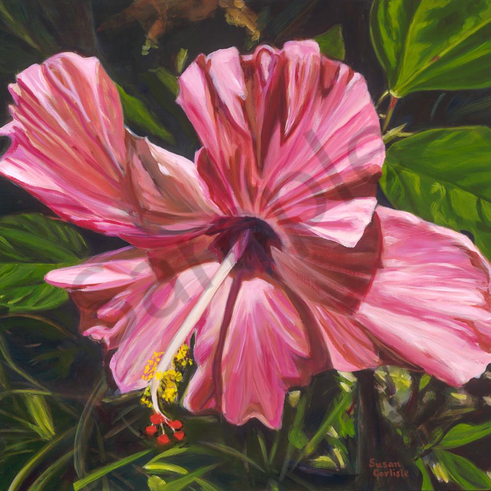 Pink hibiscus sc013 sw4idb