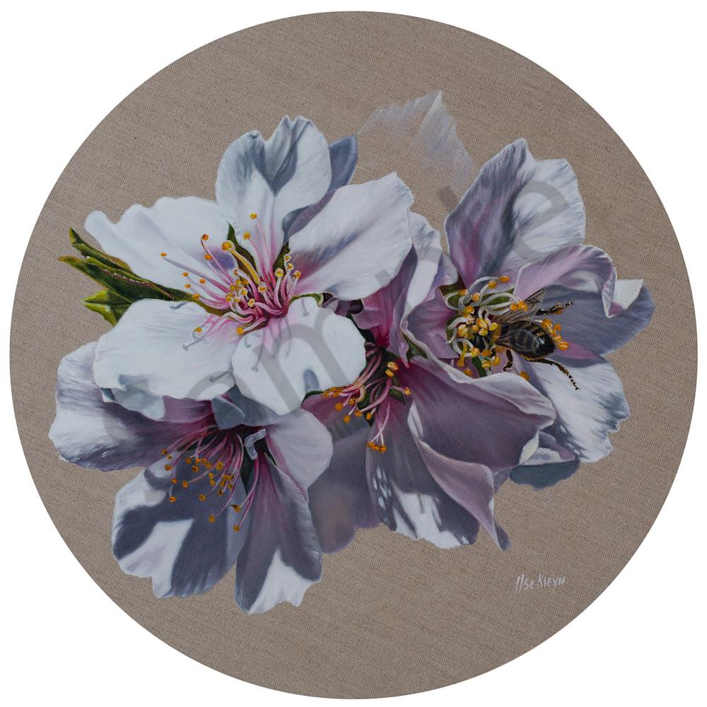 Almond blossoms by ilse kleyn dbdwid