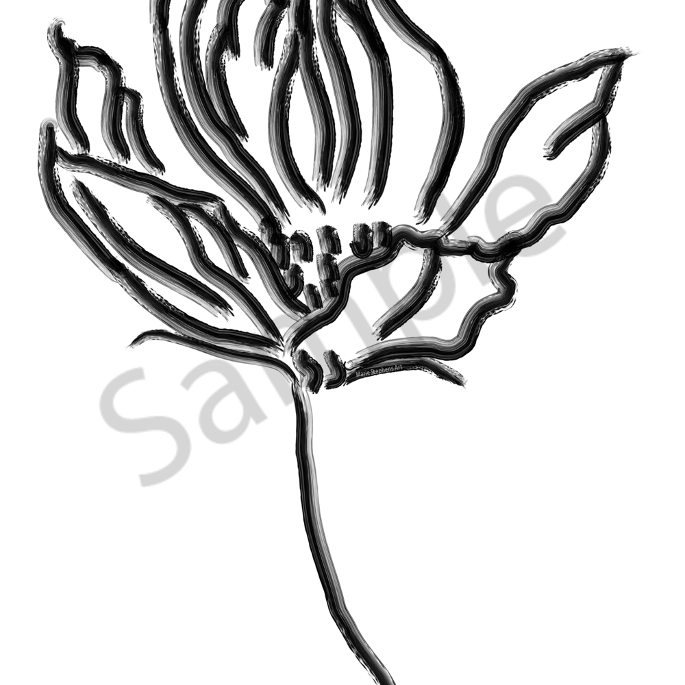 Thirdcosmos up close black and white 18x24 dklu4v