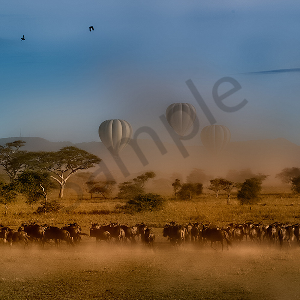 The great migration intanzania africa pkcnit