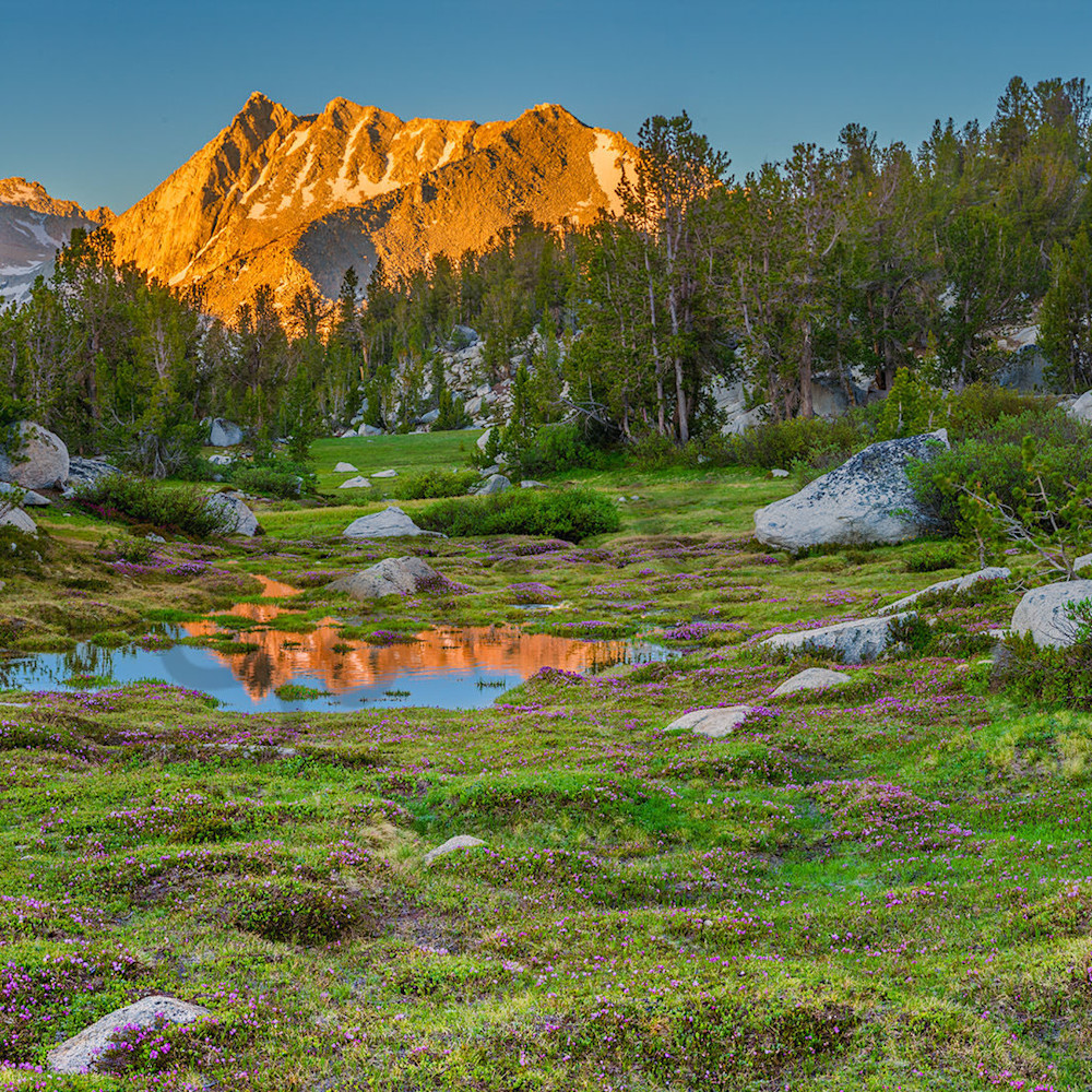 A sierra meadow wpvlcm