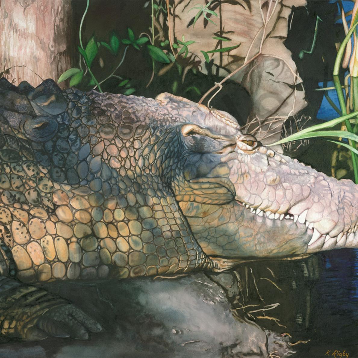 Krig 012 crocodile xbentt