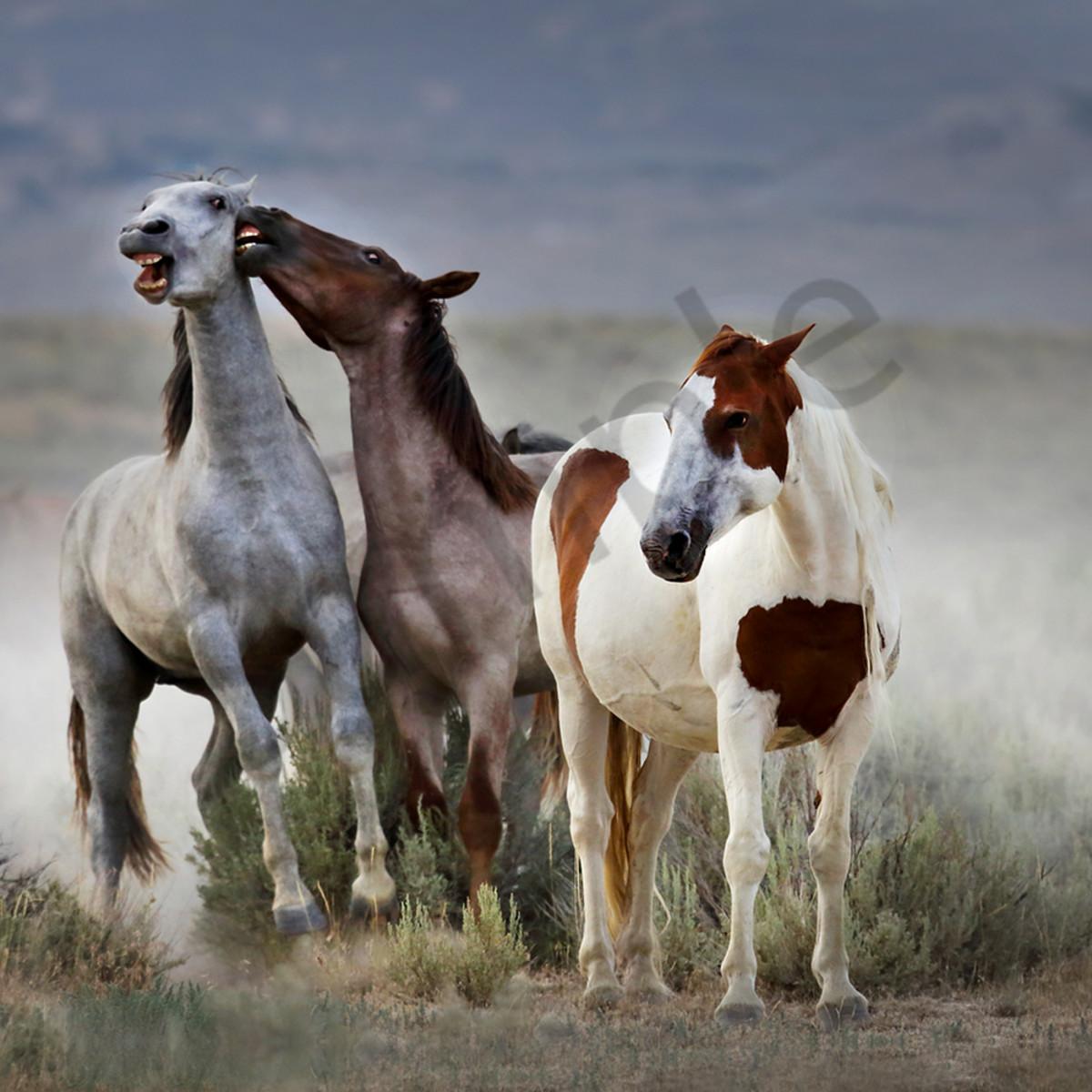 8033 jumping horses 6x4 web epjvb9