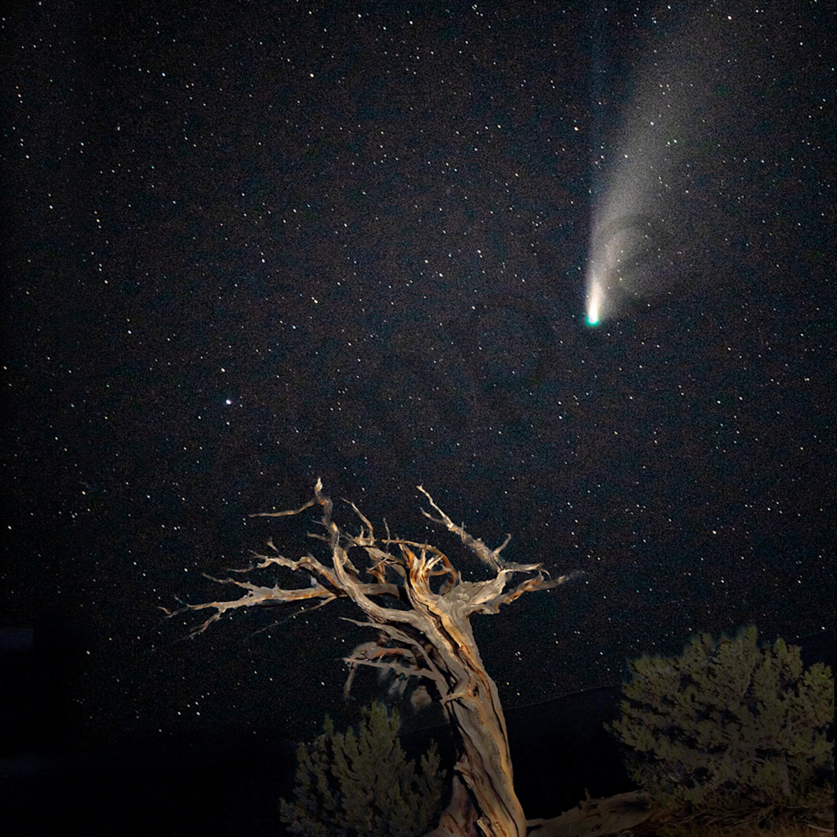 1644 star wizard comet 4x6 tmergj