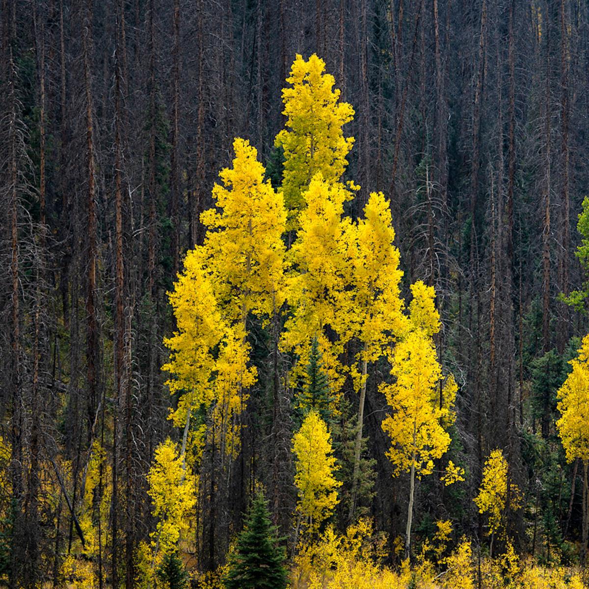 0668 v aspen pines 4x6 ggpc8o