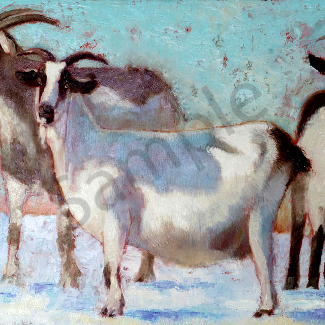 Billy goats gruffbest d3fwxn