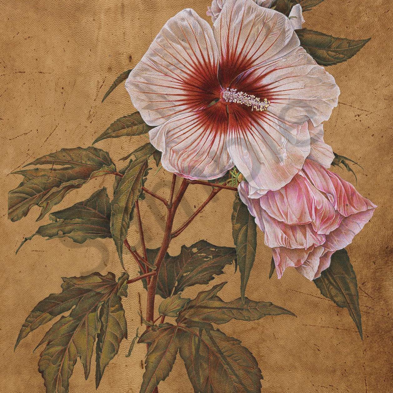 Hibiscus b lmsypv