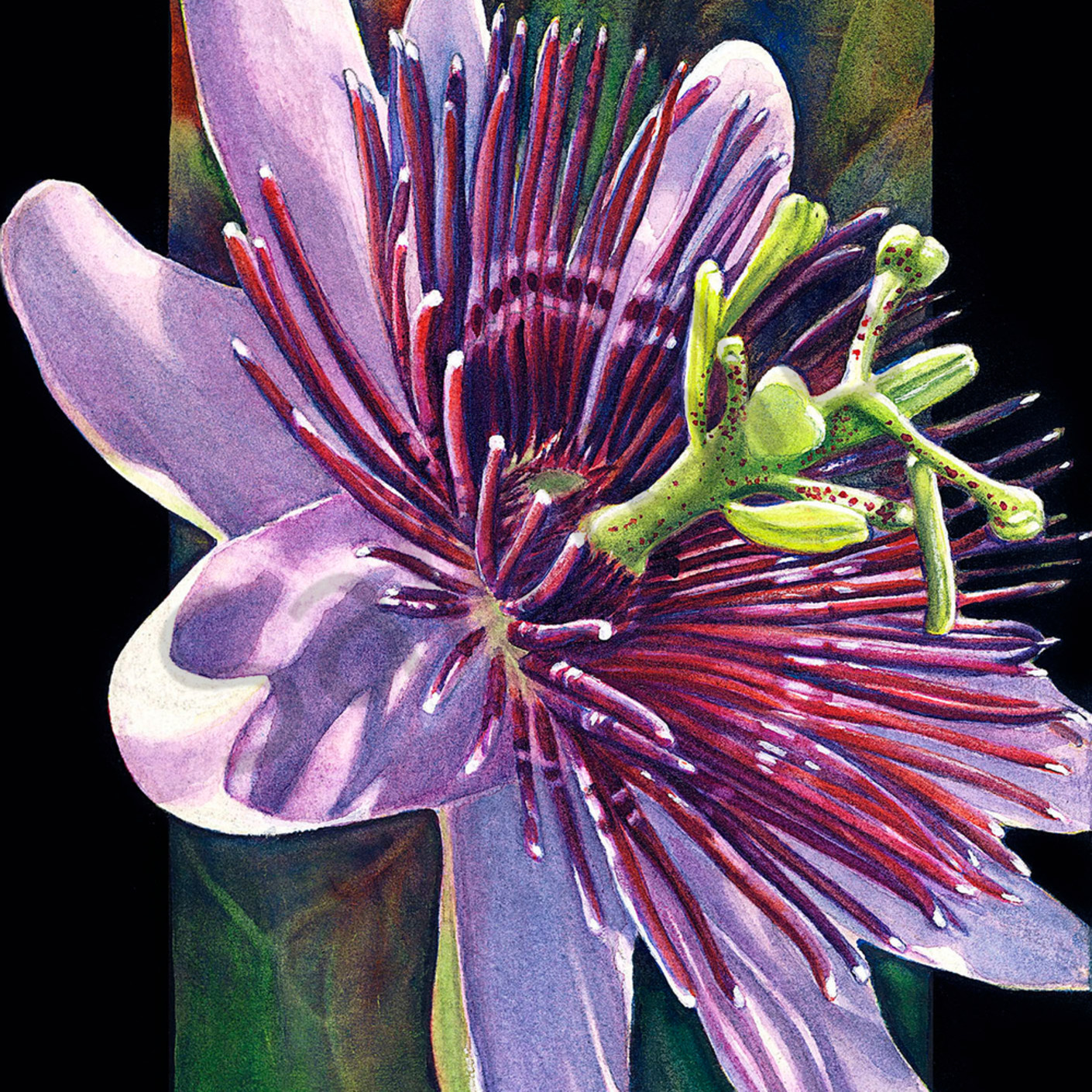 Passionflower lba20a