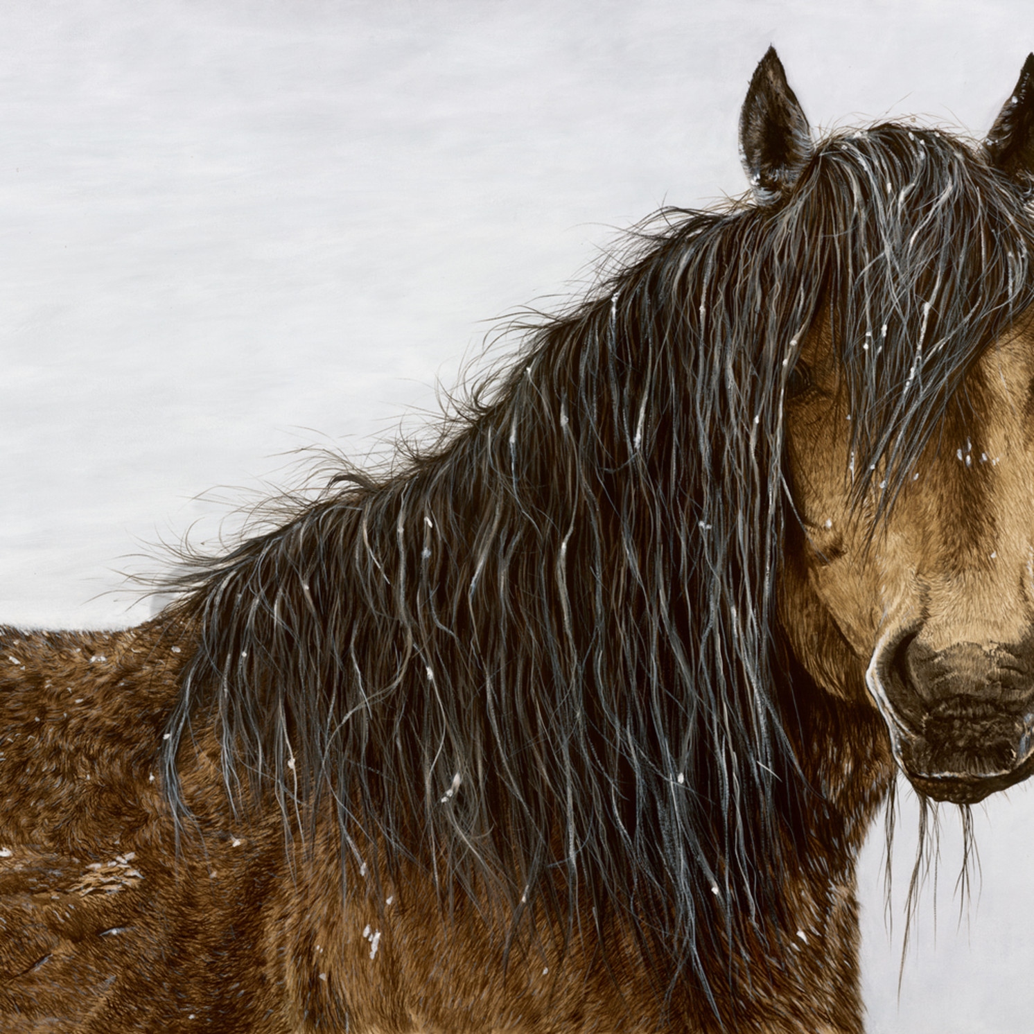 Lbre 030 wild horse winter ar2msx
