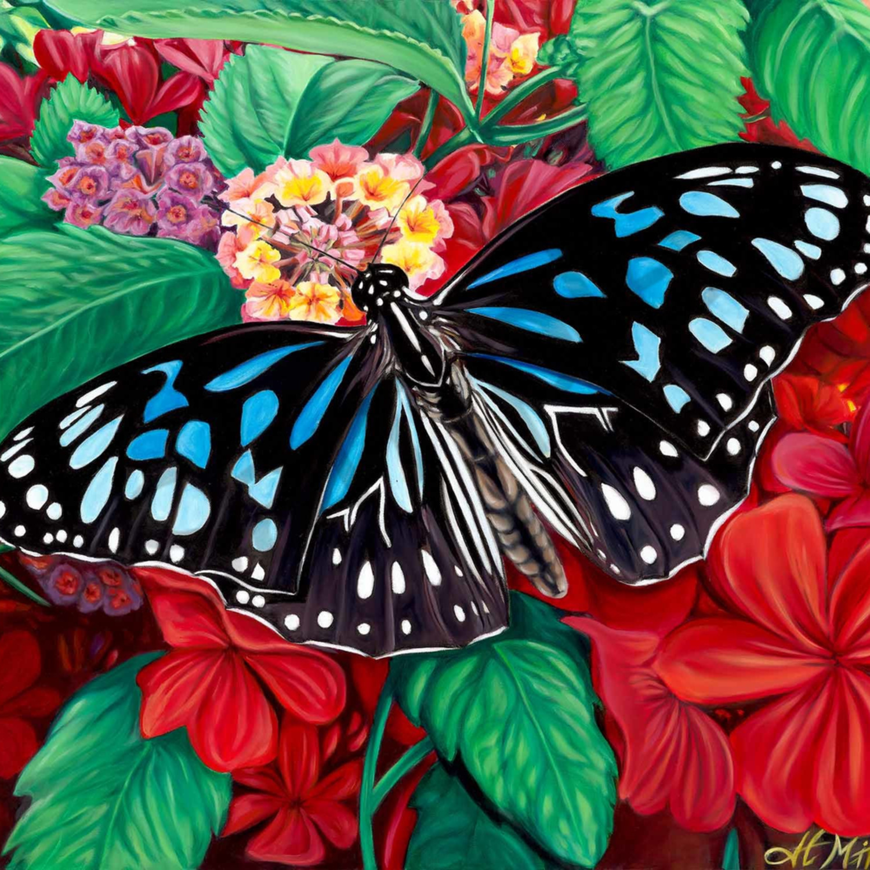 H mitra 007 blue butterfly 2000px h1xvmd