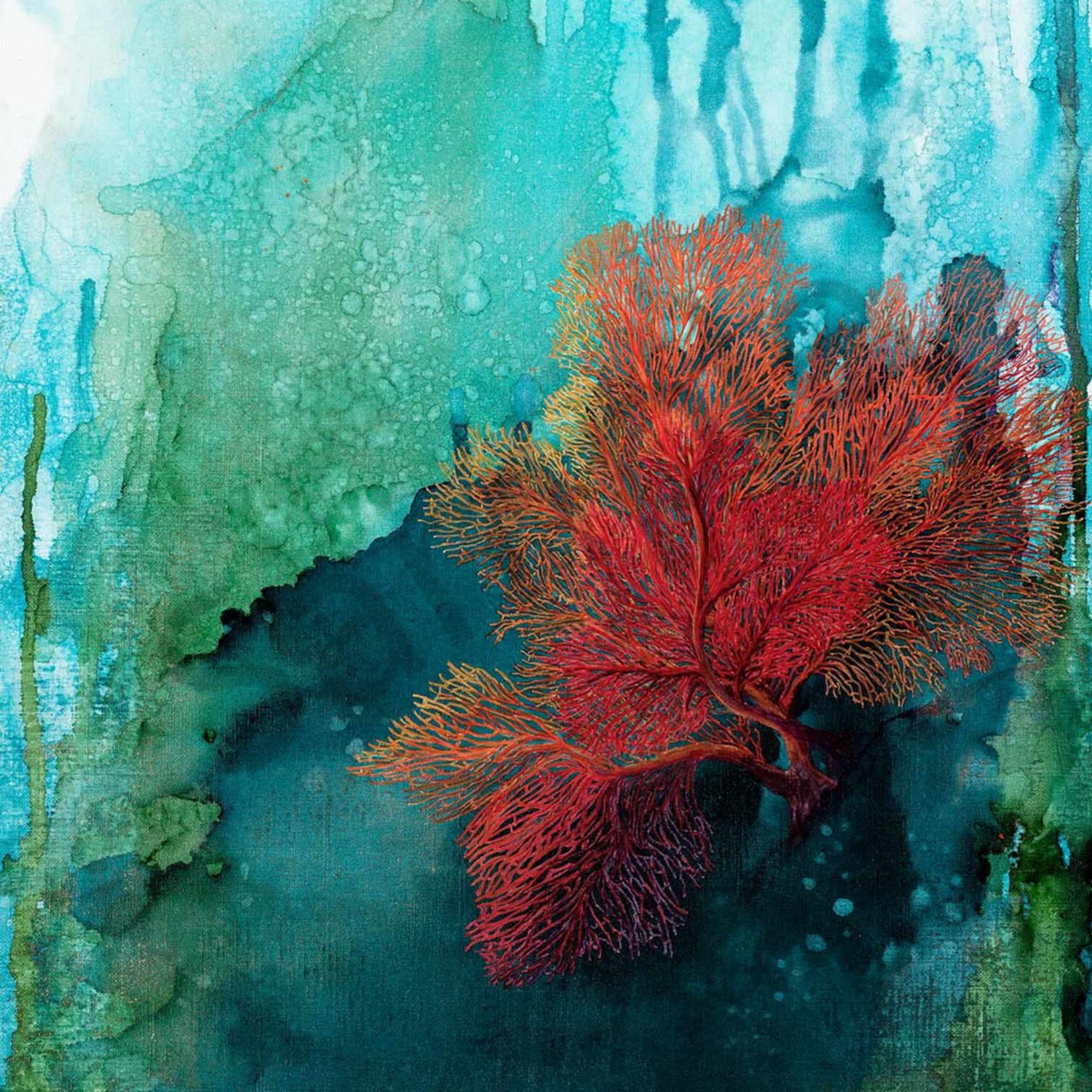 Donna maloney 005 red coral 2 2000px epibdb