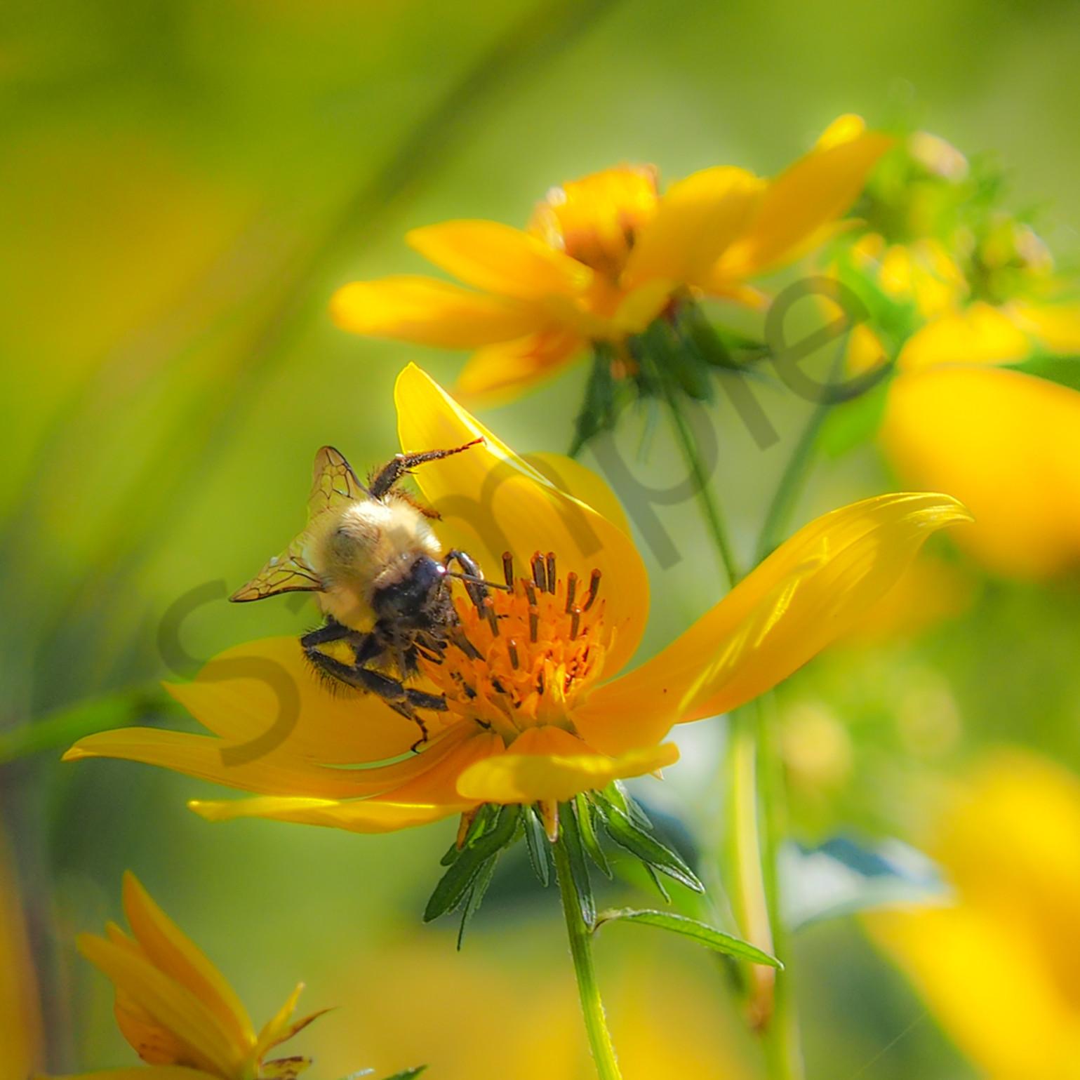 Bee nectar dbc9r3
