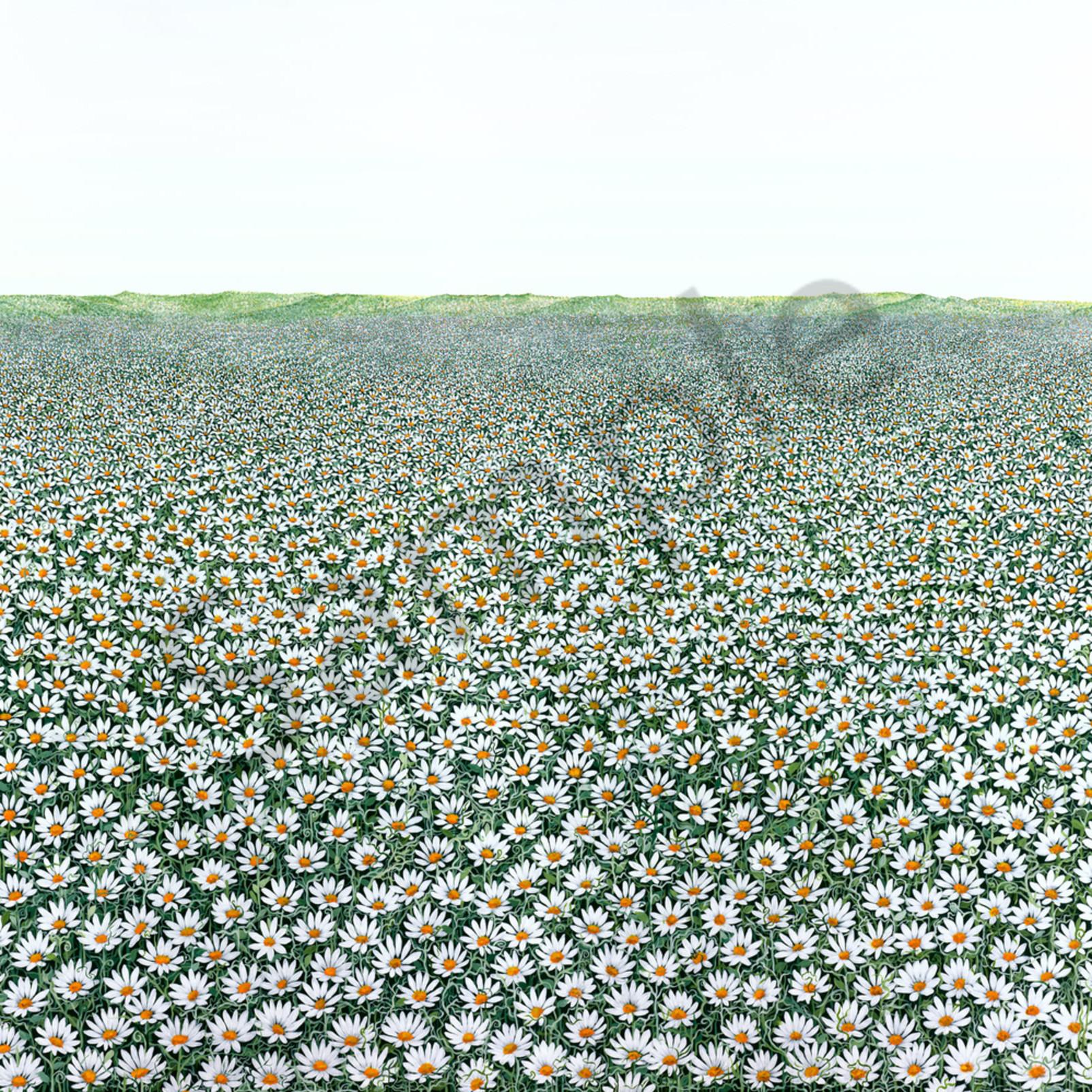 B mace 005 a field of daisies oksr92