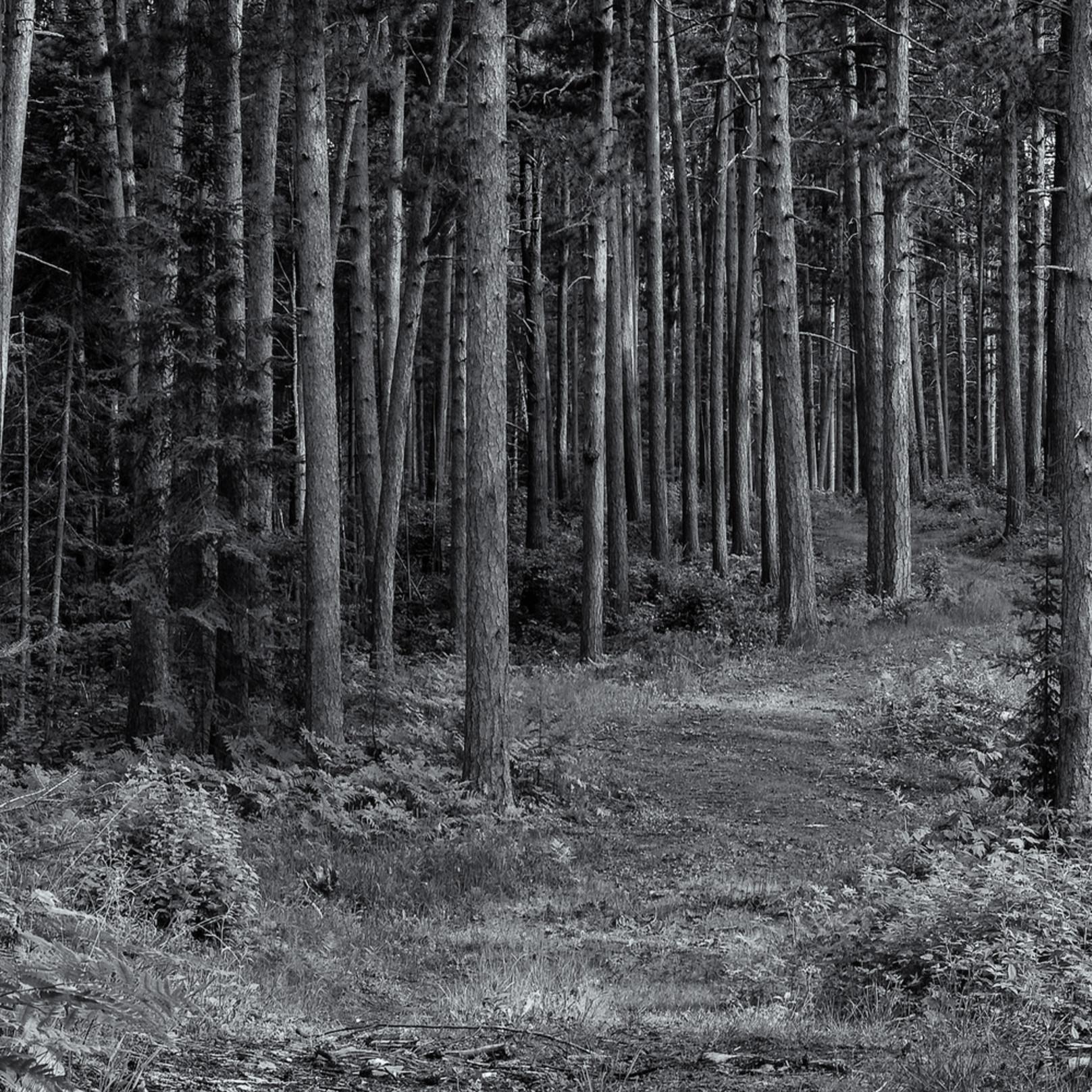 Forest glade   northern minnesota msx60c