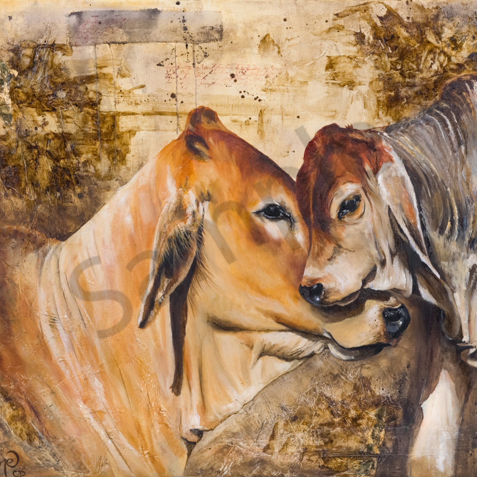 C clark dowden 001 cow and calf lgaq6s