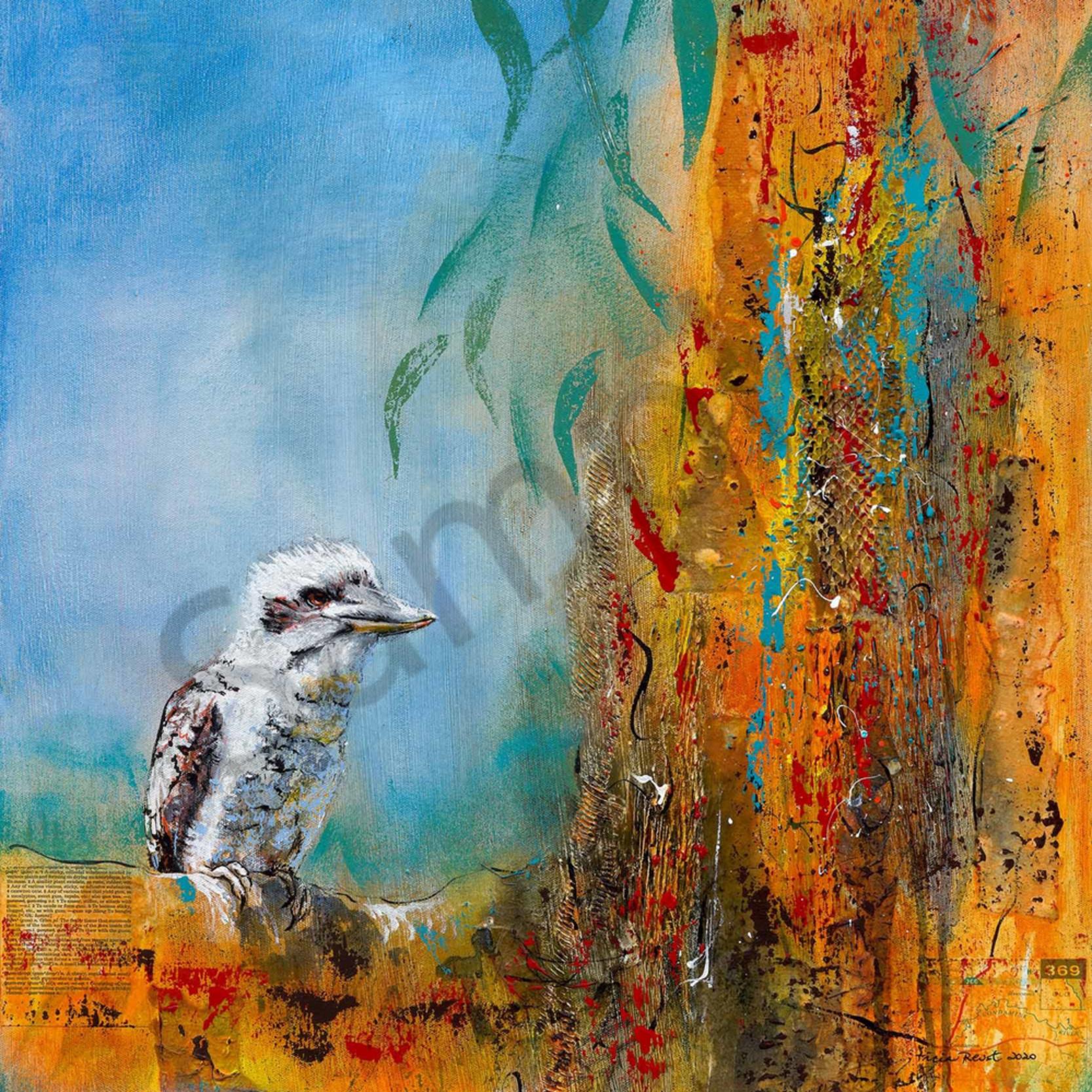 T reust 031 kookaburra sits 2000px duheyx
