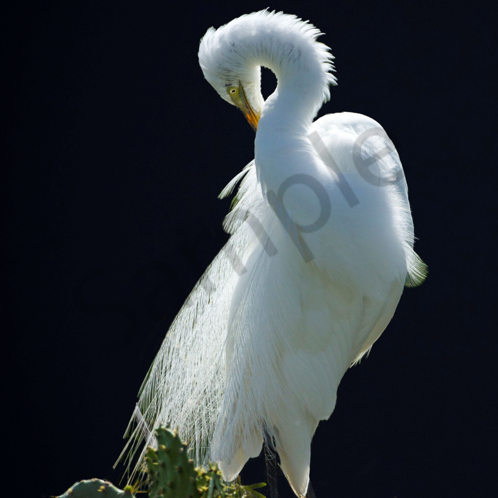 Moonlit egret 31x47 dlj0jg