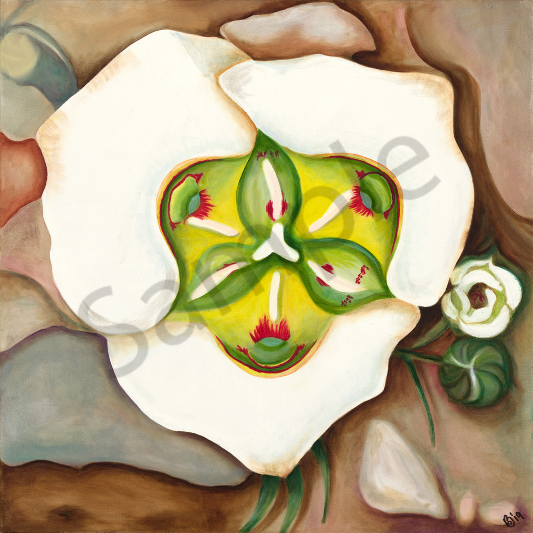 Moggre sego lily i square aysr5y