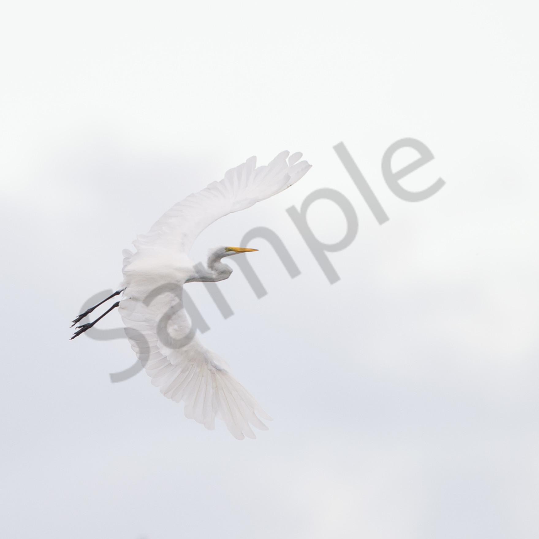 Dsc 9874 2 edit edit edit editmystic flight.jpggallery print qiiq5a