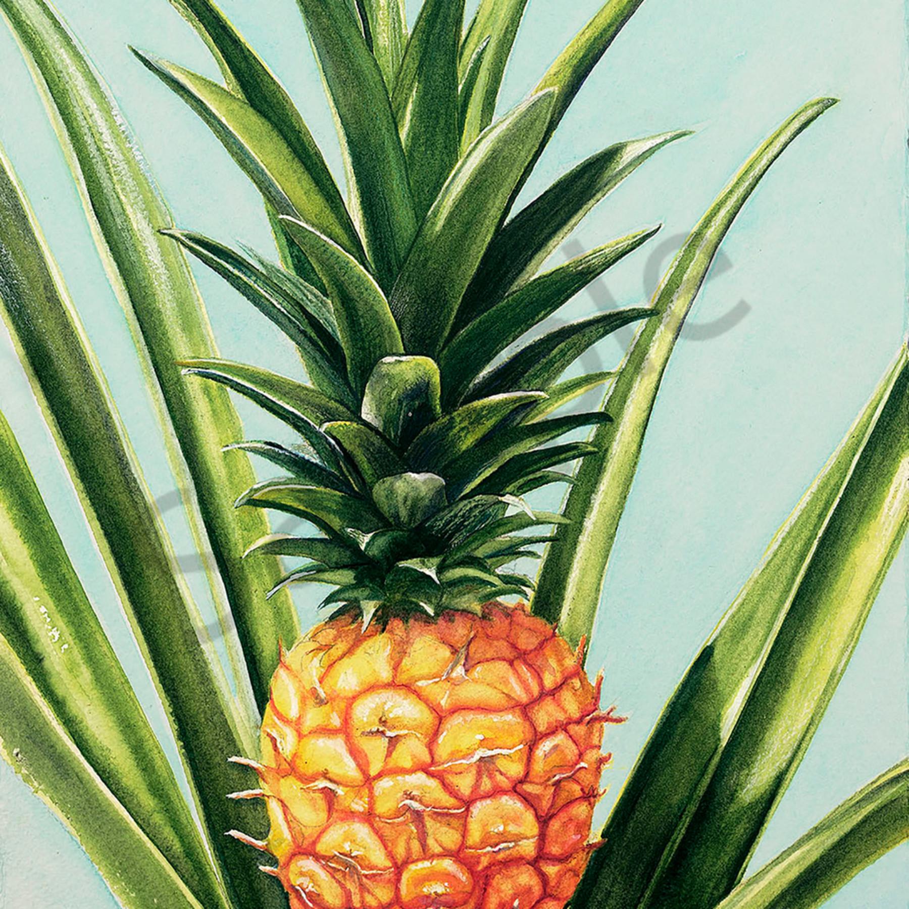 Pineapple xmuhkw