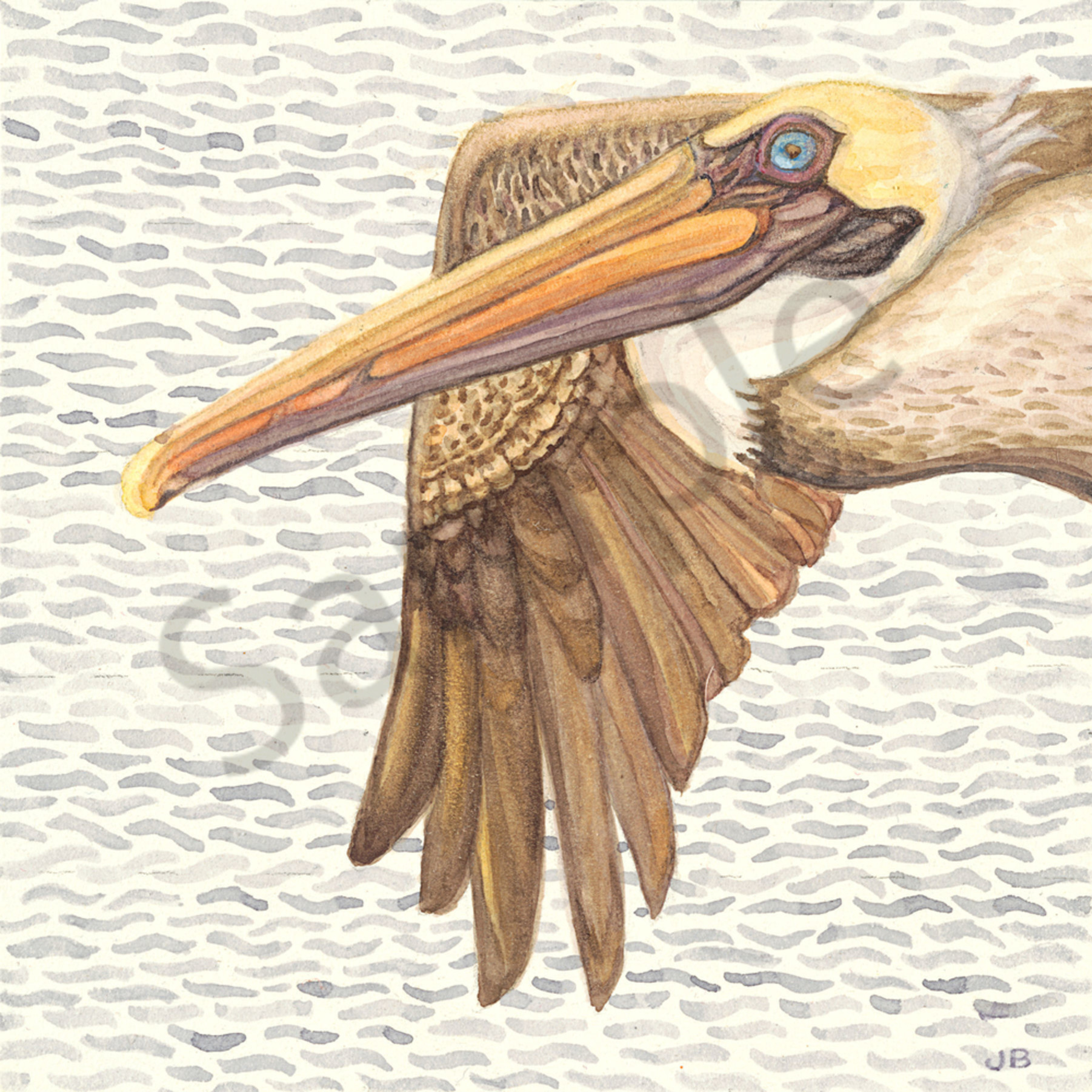 Flying brown pelican dmjmby