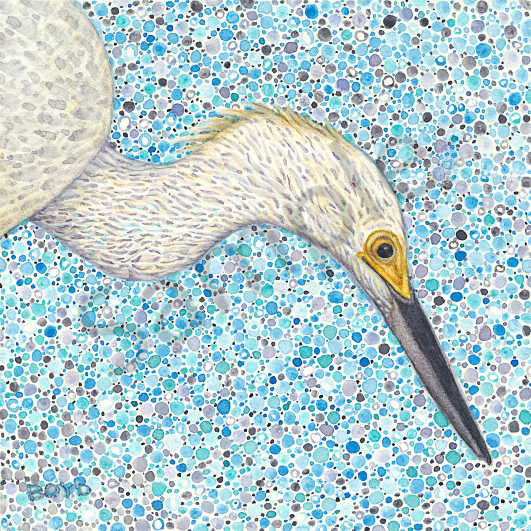 Snowy egret rxkf21