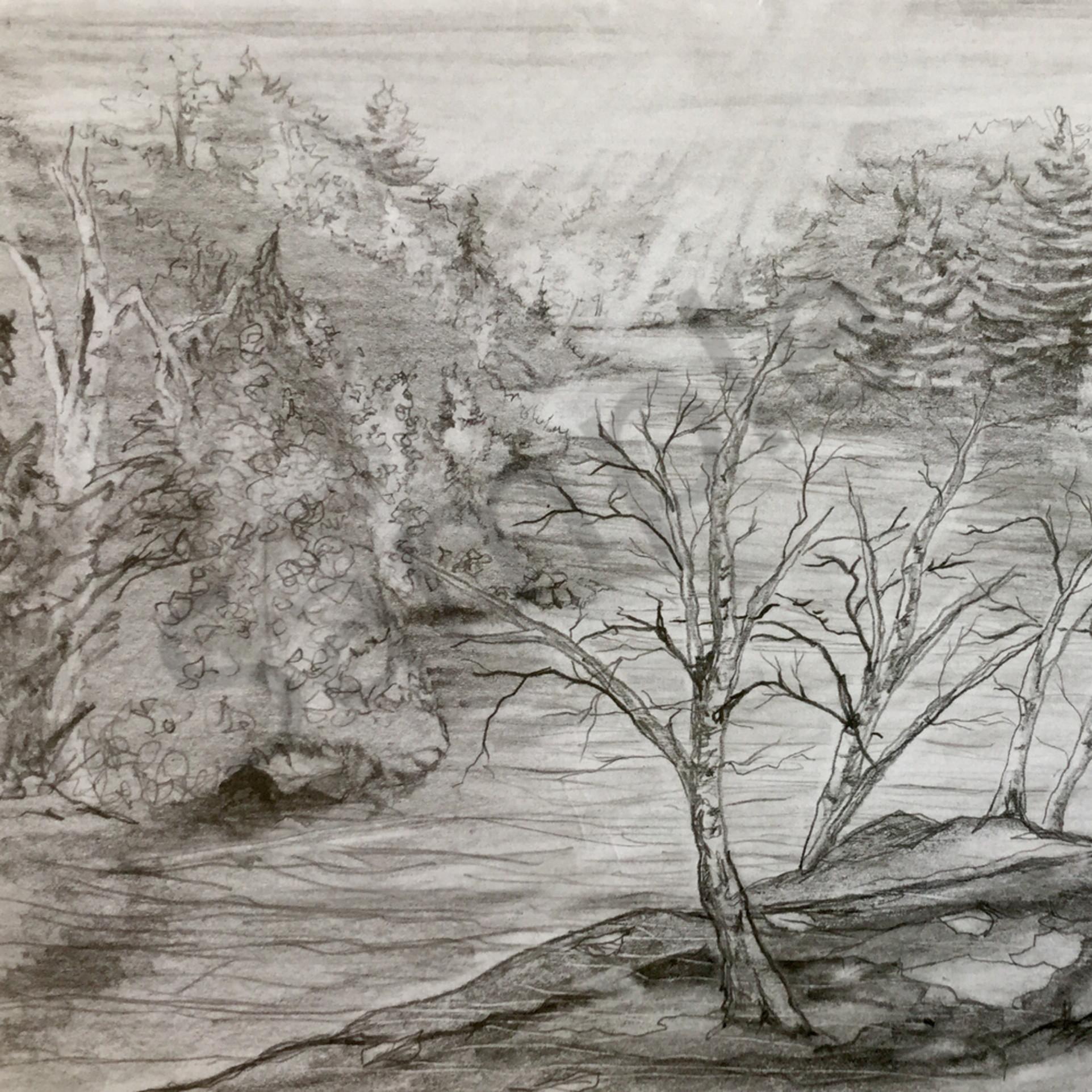 Tree sketch beaxo4
