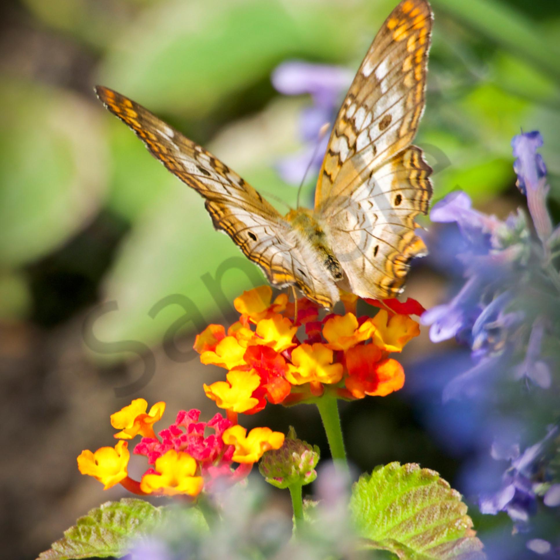Flower landing pad cw36tz