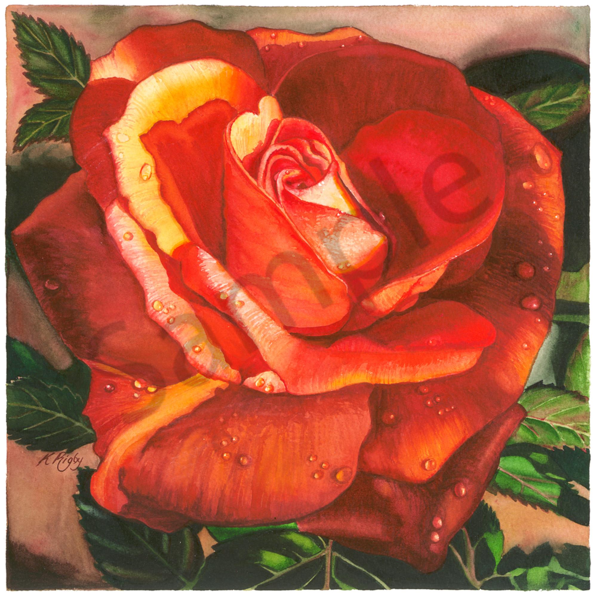 Krig 040 deep rose bjoc2u