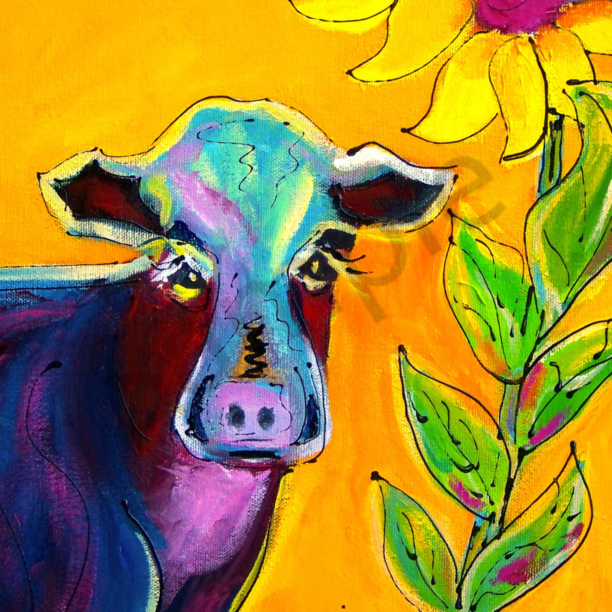Kansas cow qsw0kj
