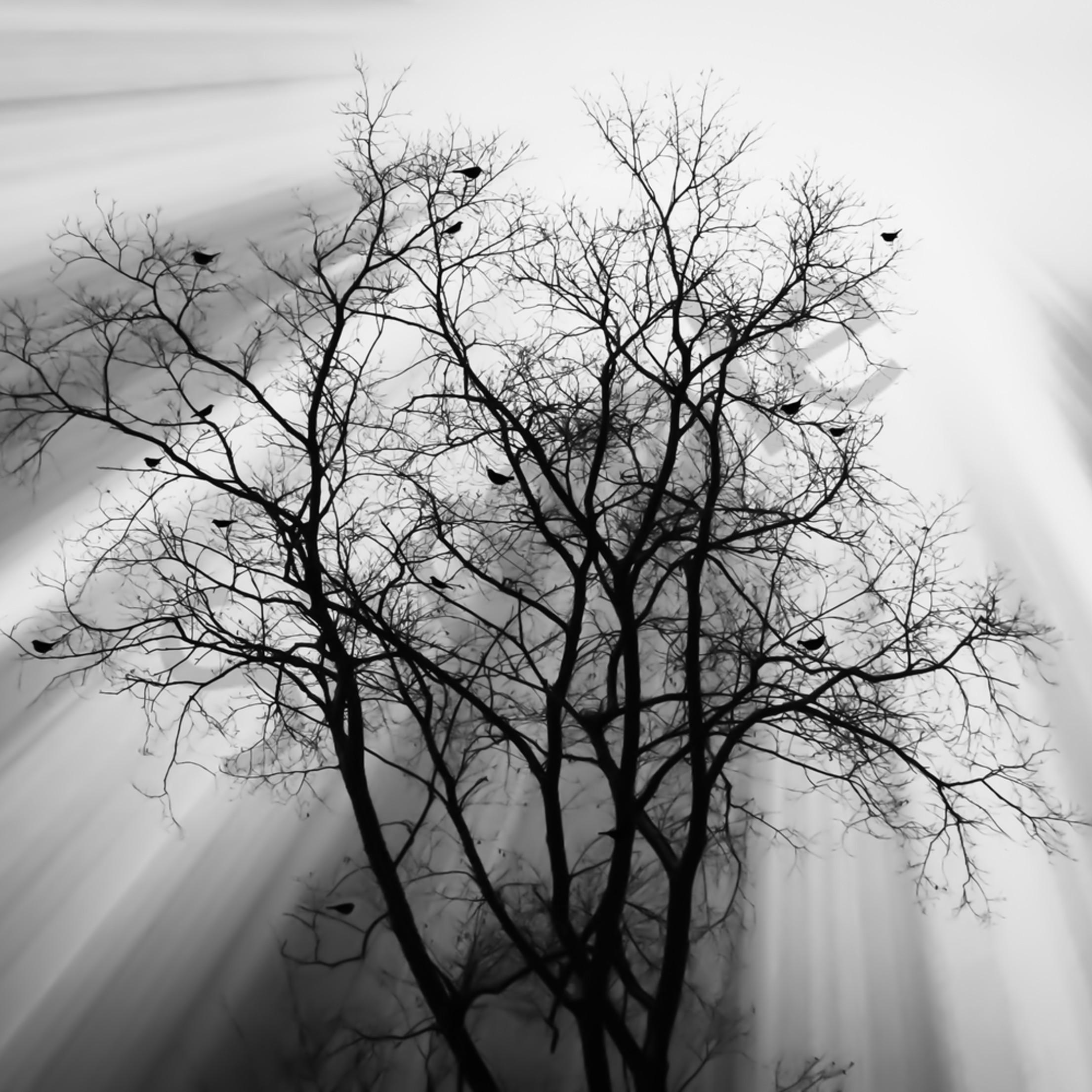 Light filled tree xgaegv