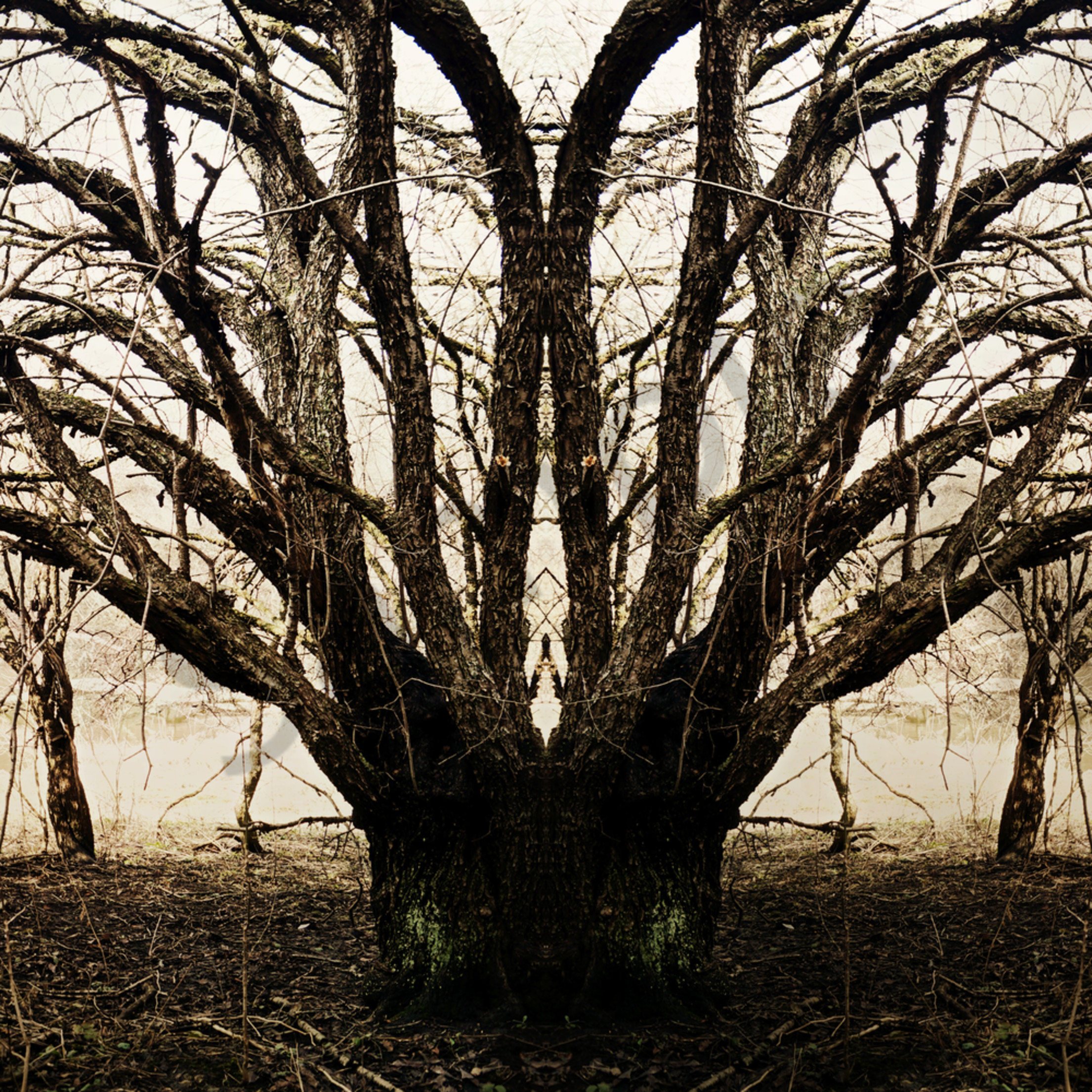 The weeping tree ao3fgv