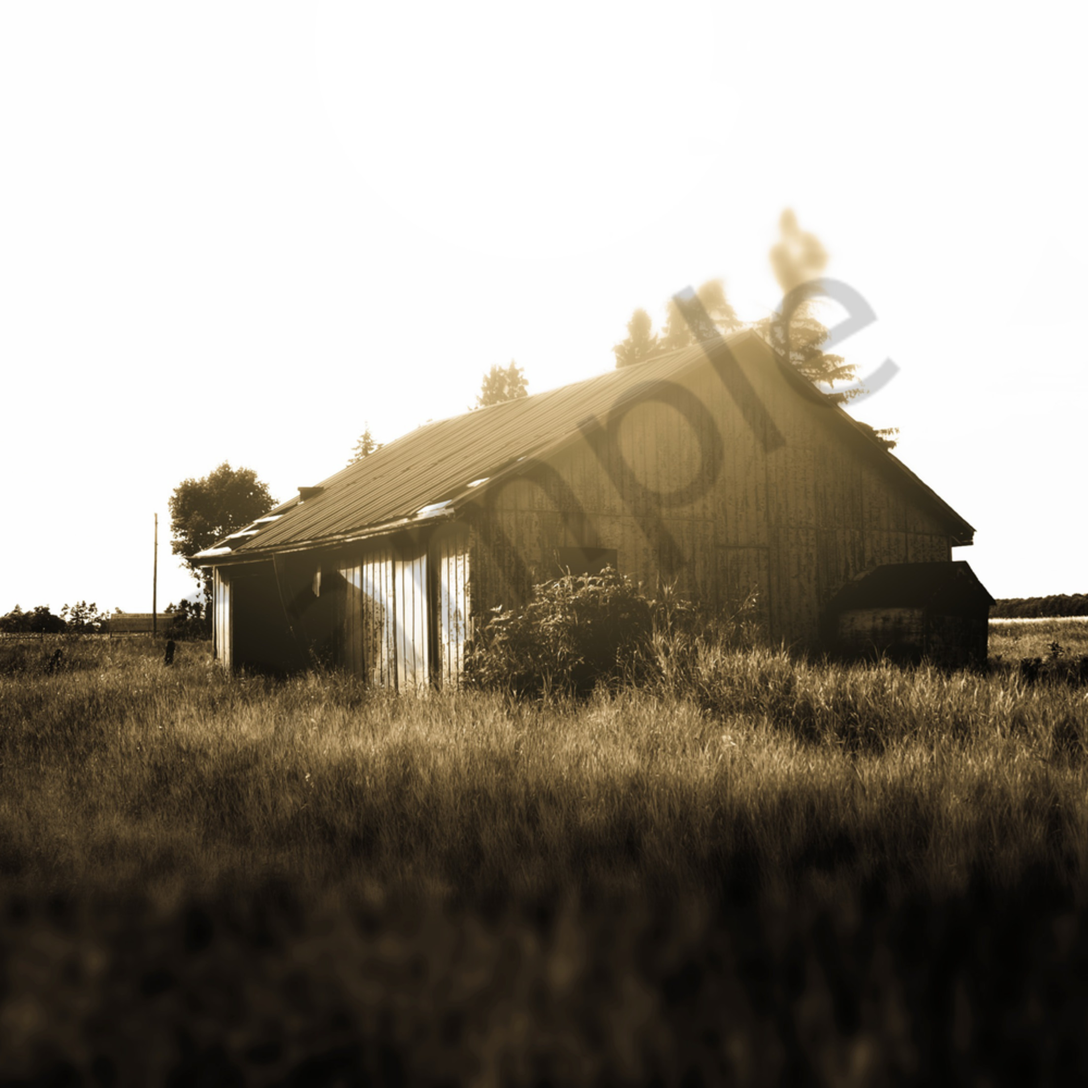 Abandoned shed in a field edg4xb