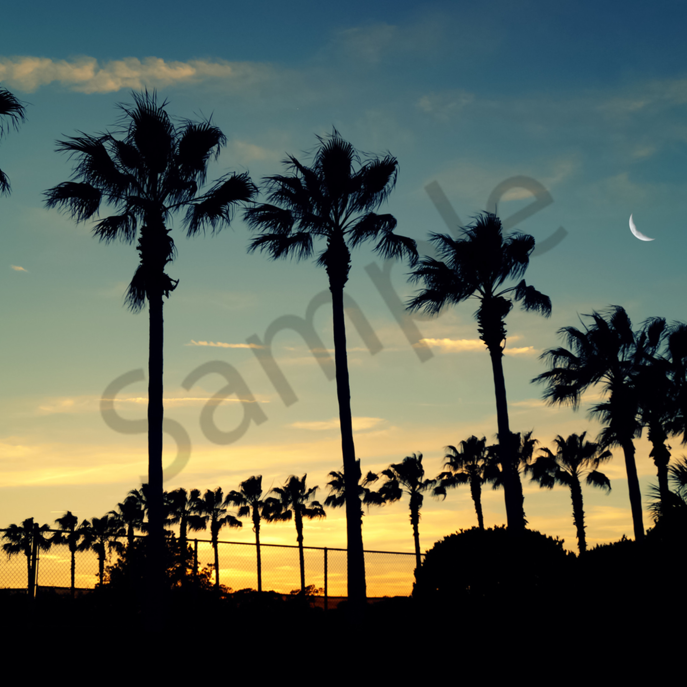 Moon and palms r4ing4